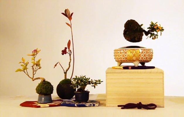 air-bonsai3