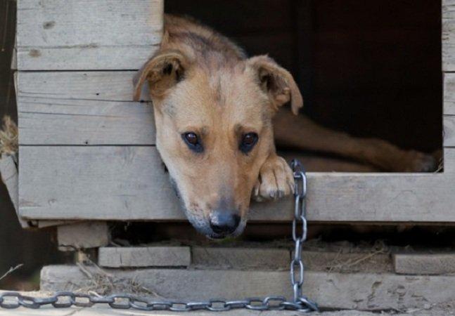 Agora, nos EUA, o abuso contra  animais é considerado crime,  assim como homicídio ou tráfico
