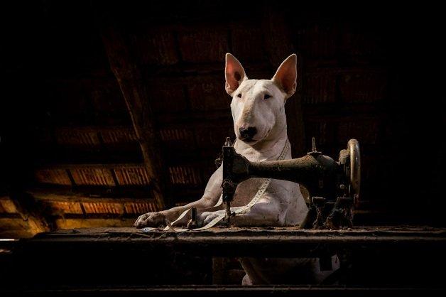cachorra3