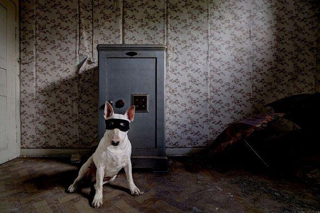 cachorra5