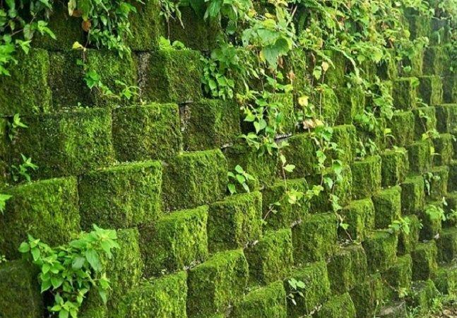 Concreto verde permite  que qualquer parede tenha vida