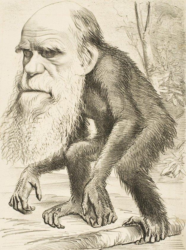Charge de Darwin como um homem-macaco