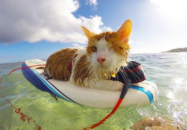 Gatinho com um olho só faz sucesso com suas aventuras nadando e surfando no Havaí
