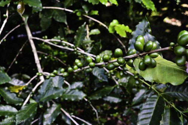 CafezalSP-6