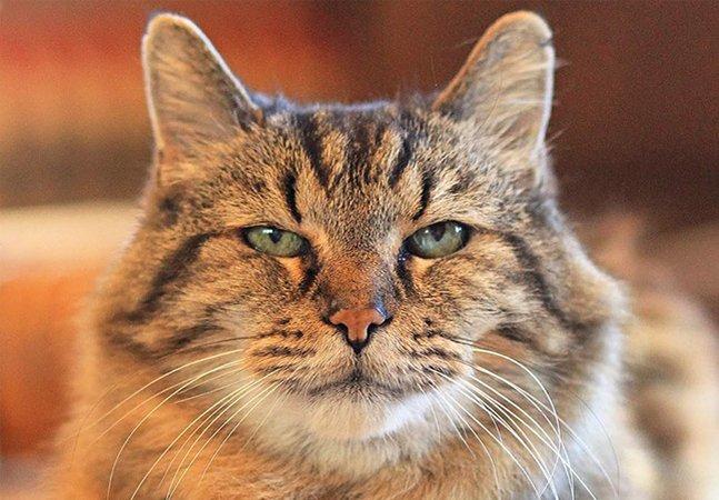 Conheça a história do gato  mais velho do mundo, que tem 26 anos  e foi adotado de um abrigo em 1989