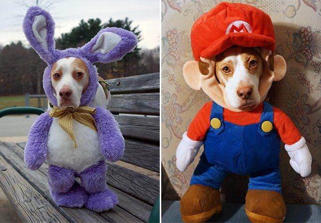As incríveis fantasias do beagle mais fotogênico da internet