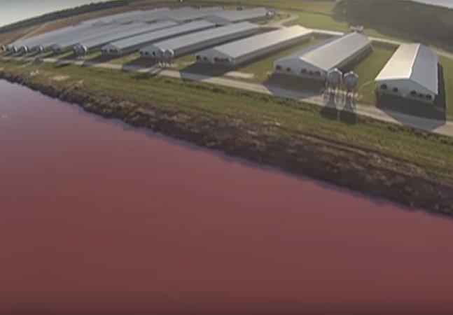 Cineasta usa drone para registrar a terrível realidade das grande fazendas de animais