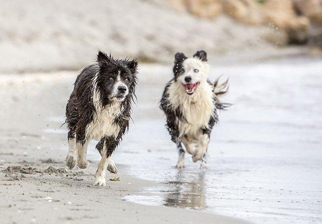 Cachorro que esteve desaparecido durante 7 anos volta pra casa e ganha ensaio com seu novo 'irmão'