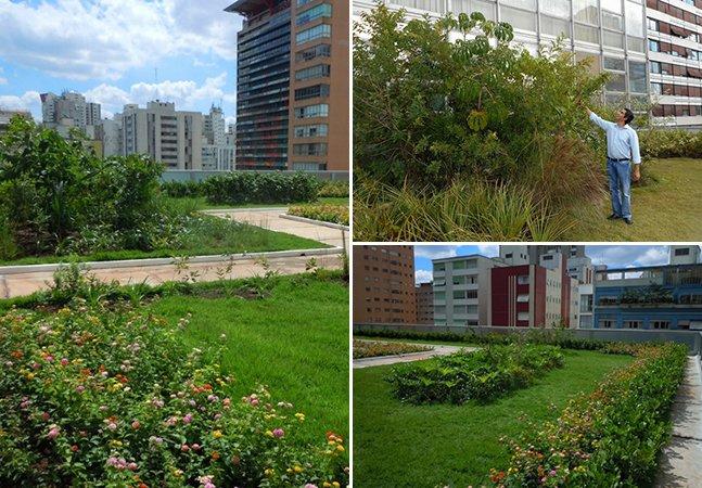 São Paulo ganha primeiro teto verde com cobertura de mata atlântica