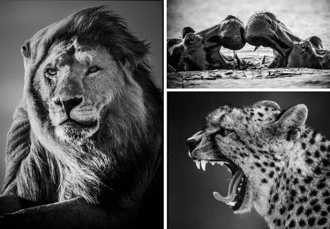 O incrível trabalho do fotógrafo especialista em retratar animais selvagens