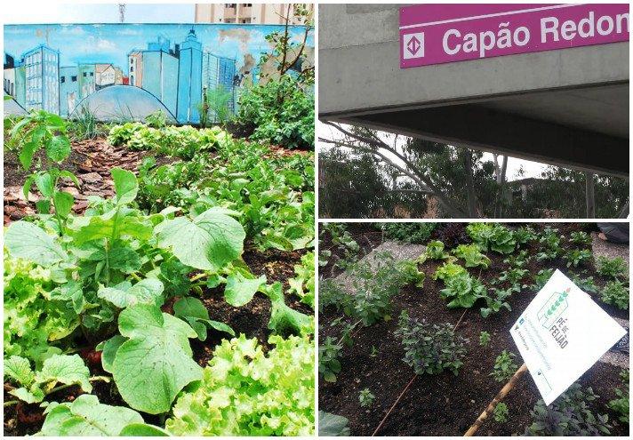 Horta comunitária oferece  alimentos de graça para  moradores do Capão Redondo