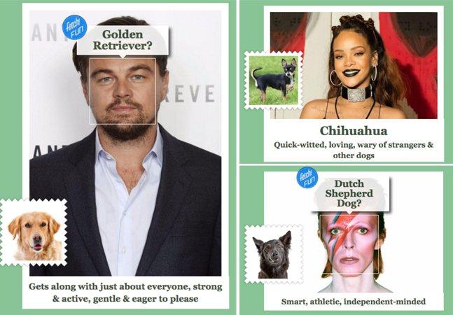 Esse site diz com que raça de  cachorro você se parece;  faça o teste!