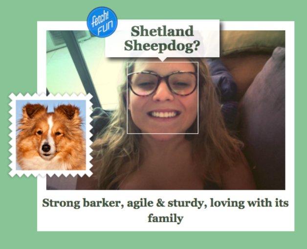 dog-stephanie