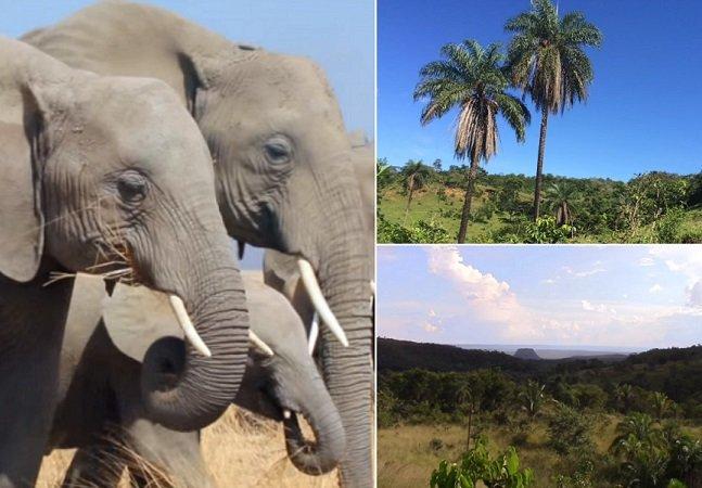 Brasil terá primeira reserva de   proteção de elefantes da América Latina   para abrigar vítimas de maus tratos