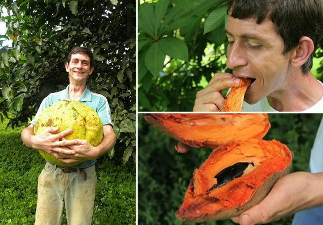 No interior de SP, colecionador de frutas  cultiva mais de mil espécies,  muitas delas raríssimas