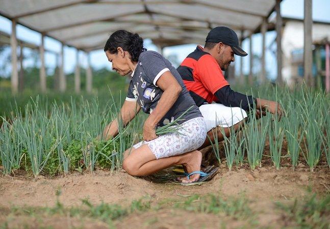 Cultivar uma horta comunitária  fez com que essa família virasse o jogo  e conseguisse garantir sua renda mensal