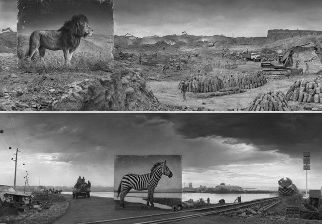 Fotógrafo cria série poderosa com retratos  de animais em tamanho real nos  seus habitats, agora destruídos