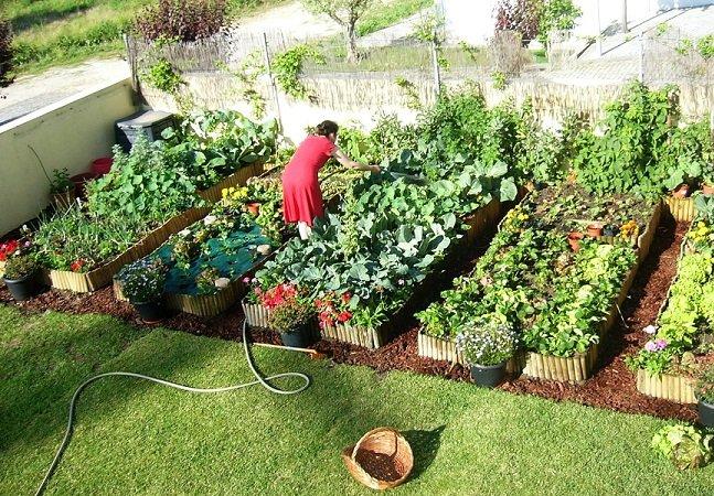 Startup portuguesa lança app que ajuda a cultivar horta orgânica em casa