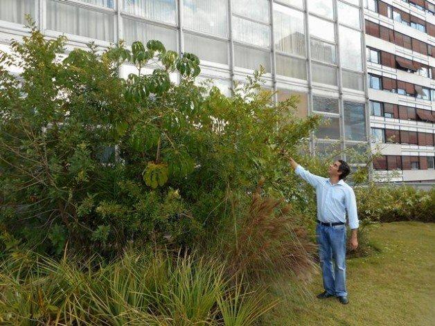 telhados-verdes-skygarden-com-floresta-skygarden-7