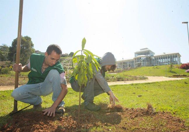 Ao invés de porres homéricos e tinta  na cara, jovens plantam árvores  para celebrar entrada na facul
