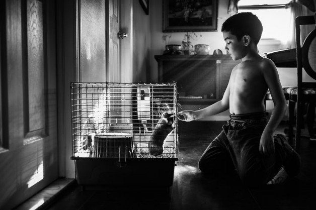 Boy-and-his-pets-77__880