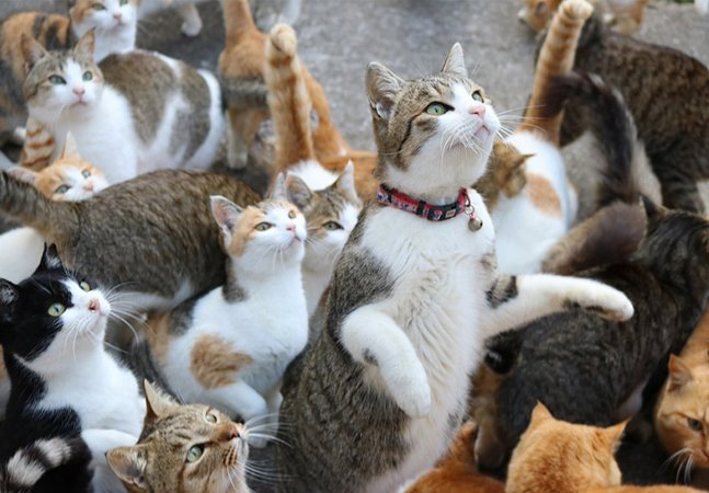 Veja como a internet ajudou  (até demais) a amparar os  felinos da famosa 'Ilha dos Gatos'