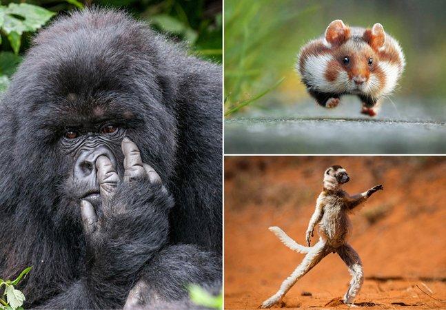 Concurso premia as fotos  mais engraçadas do reino animal;  veja as imagens