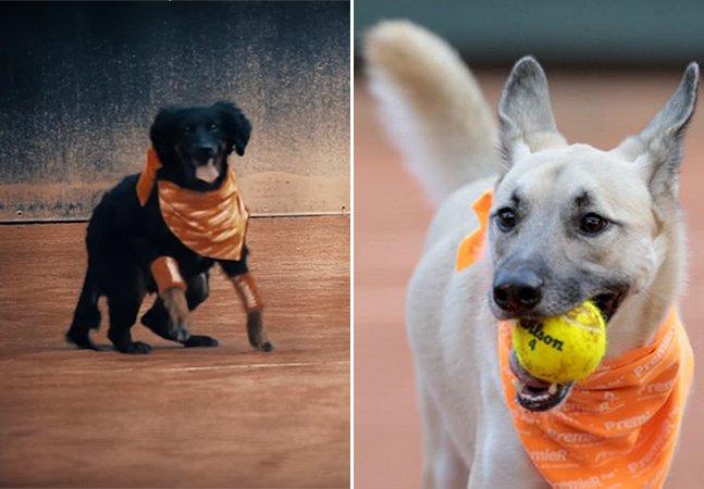 Cachorros abandonados viram  'cãodulas' no Brasil Open de Tênis