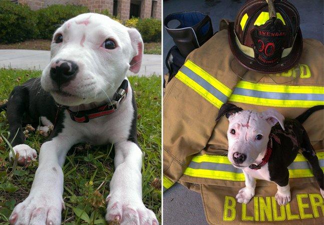 Esse cãozinho foi abandonado após  sobreviver a um incêndio e tornou-se  bombeiro ao lado de seu salvador