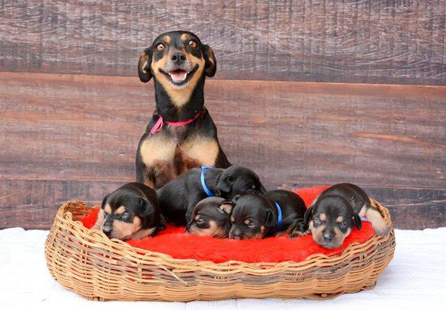 Após ensaio grávida,  a cadela Lilica agora exibe  seus fofíssimos filhotes em novas fotos