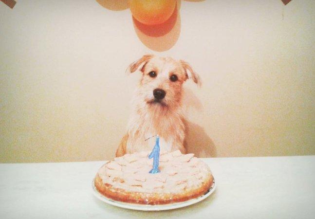As imagens da festa de  aniversário do Madruguinha  vão fazer o seu dia melhor