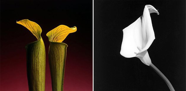 MAPPLETHORPE15