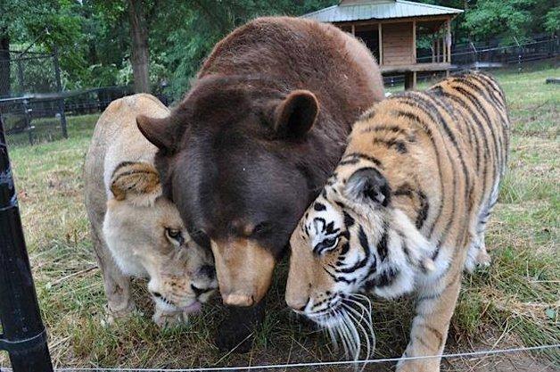 animais-santuario2