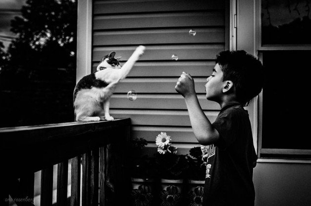 boy-and-his-pets__880