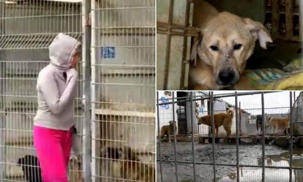 Ela foi visitar um abrigo  de cães, mas não pôde   escolher; ficou com todos