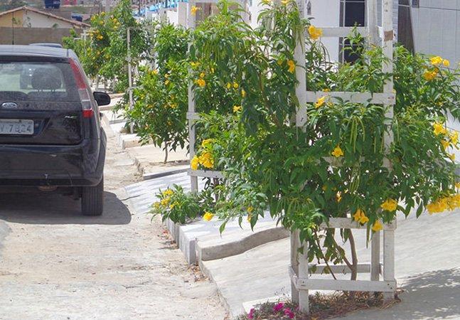 A cidade brasileira que está plantando 2 árvores para cada habitante