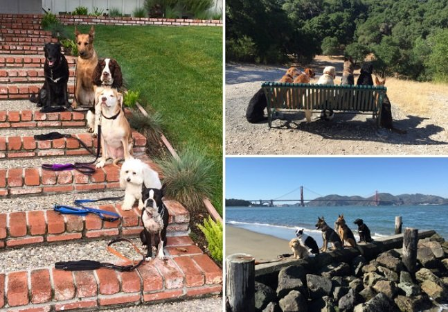 Este passeador de cães mantém  os donos informados enviando  fotos das aventuras dos pets