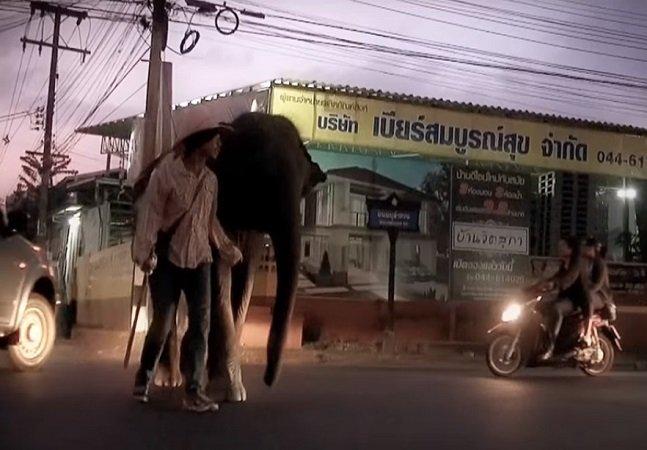 A história do morador de rua que  quer dar uma vida digna ao elefante  que garantiu seu sustento por anos