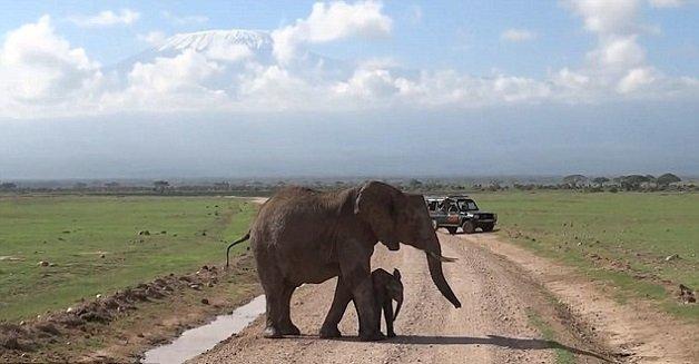 elefante7