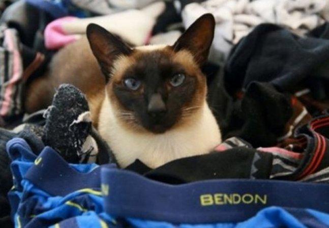 """Os donos desse gato """"ladrão de roupas""""  acharam uma maneira de  devolver as peças aos vizinhos"""
