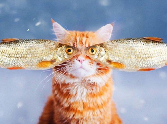 Fotógrafa usa o Photoshop para  transformar os registros de  seu gato em imagens incríveis