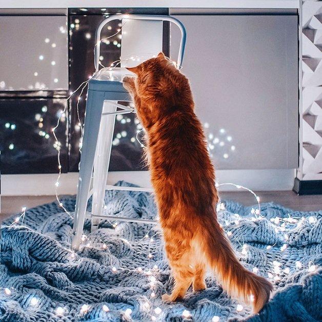 gato13
