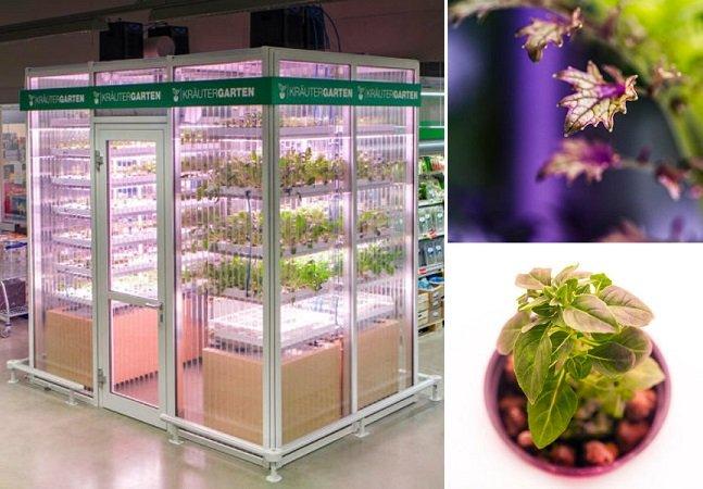 Este supermercado cultiva os  vegetais dentro da própria loja