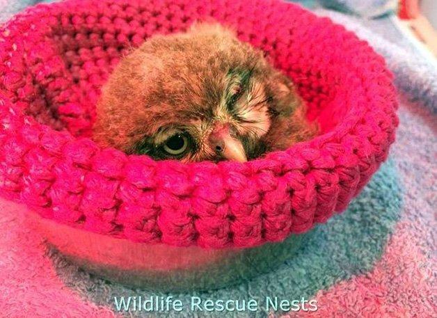 wildliferescuenests-owl0.jpg.653x0_q80_crop-smart