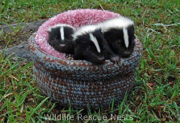 wildliferescuenests-skunk.jpg.653x0_q80_crop-smart