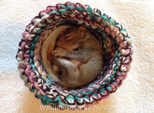 wildliferescuenests-squirrels3.jpg.653x0_q80_crop-smart