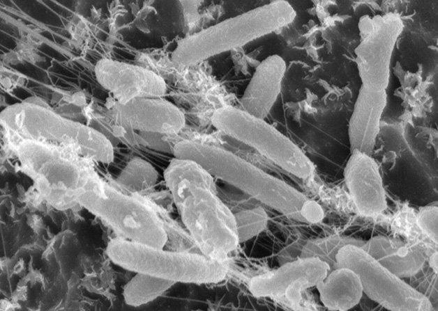 1457976809_881_Ideonella-sakaiensis-bacteria-feeding-on-plastic