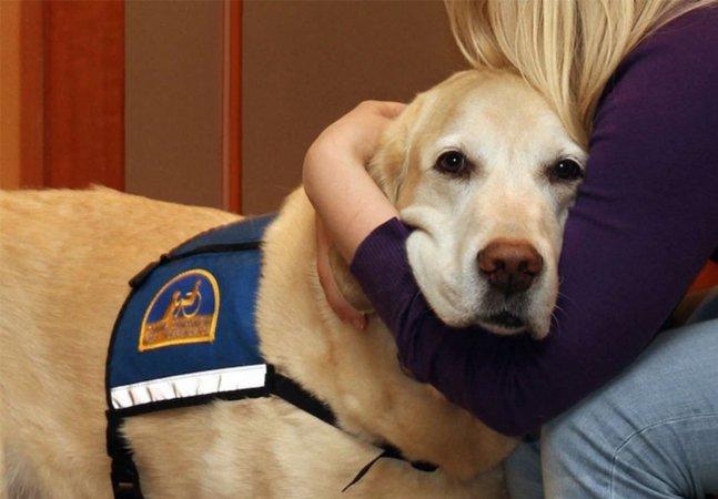 ONG treina cães para ajudar  pessoas que sofreram abuso a  superarem o estresse dos tribunais