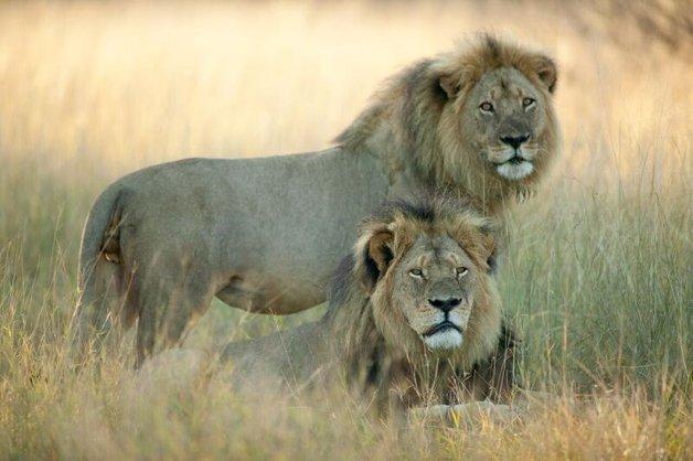Cecil e Jericho