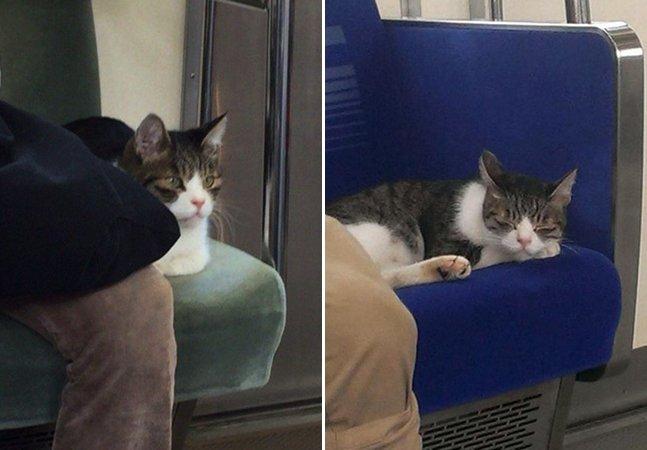 A curiosa história do gato que tem sido visto pegando o metrô sozinho há cerca de 3 anos